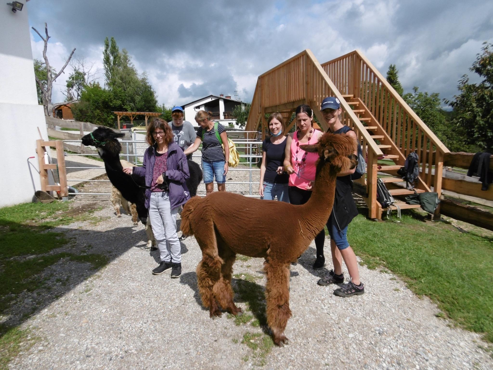 Gruppenfoto Alpaka-Wanderung